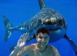 Shark Tank Survival Guide